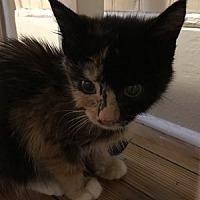 Adopt A Pet :: Carrot - Hudson, NY