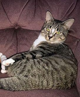 Adopt A Pet :: Vasi  - Devon, PA