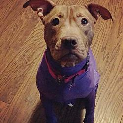 Puppies for Sale in Macon Georgia - Adoptapet com