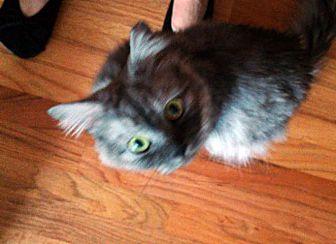 Adopt A Pet :: Horik  - Troy, MI