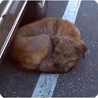 Adopt A Pet :: Jo Jo - Riverside, CA