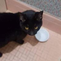 Adopt A Pet :: Misty - Long Beach, NY