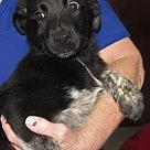 Adopt A Pet :: Hunnicut