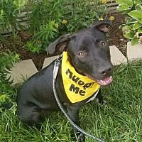 Adopt A Pet :: Wish - Detroit, MI
