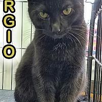 Adopt A Pet :: Sergio - Oak Ridge, TN