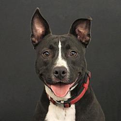 Angel's Heart Dog Rescue in Yorba Linda, California
