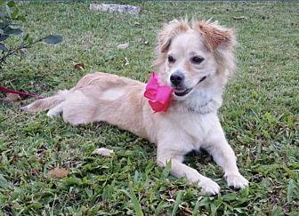 Adopt A Pet :: Blondie  - Northwood, NH