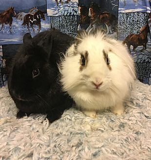 Other/Unknown Mix for adoption in Idaho Falls, Idaho - Ryker and Skyrah