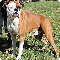 Adopt A Pet :: Mikey - Hudson, NH