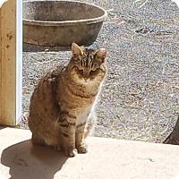 Adopt A Pet :: Lizzie - Washington, VA