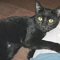 Adopt A Pet :: Silky - Miami, FL