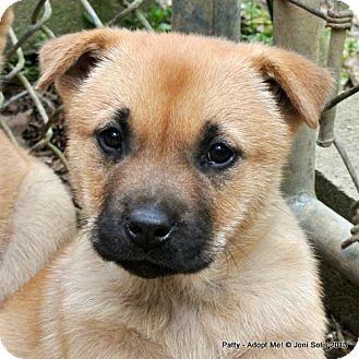 Metairie La Labrador Retriever Meet Patty A Pet For Adoption