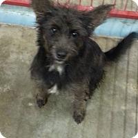 Adopt A Pet :: Licorice - La Crosse, WI