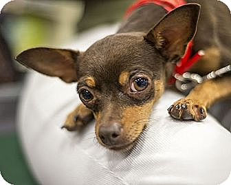 Irving Animal Shelter Adoptable Dogs