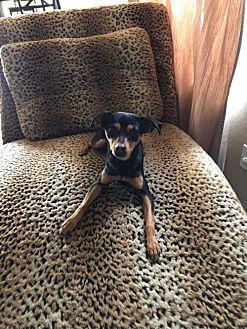 Adopt A Pet :: Zoey  - Phoenix, AZ