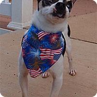 Adopt A Pet :: Bandit - Madison, WI