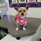 Adopt A Pet :: Lydia