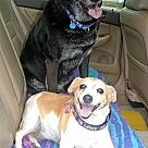 Adopt A Pet :: Foxy & Rocky #2