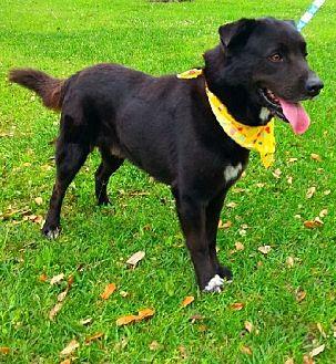 Adopt A Pet :: Niko  - Simsbury, CT