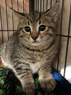 Adopt A Pet :: Frances  - Moose Jaw, SK