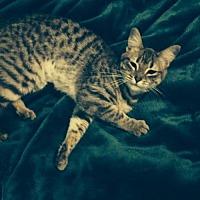 Adopt A Pet :: Morgan - St. Cloud, FL