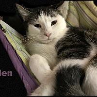 Adopt A Pet :: Helen - East Stroudsburg, PA