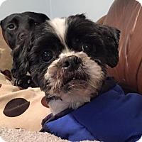 Adopt A Pet :: Oscar - Newtown, CT