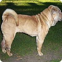 Adopt A Pet :: Leelee - Spokane Valley, WA