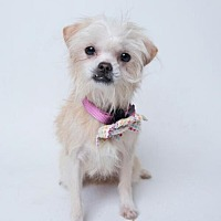 Adopt A Pet :: Sofie - Kenner, LA
