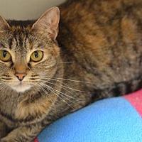 Adopt A Pet :: Cassie151469 - Atlanta, GA