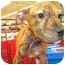 Photo 3 - Shar Pei/Terrier (Unknown Type, Medium) Mix Puppy for adoption in Detroit, Michigan - Loulay-Adopted