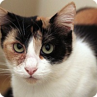 Adopt A Pet :: Sinead - St. Louis, MO