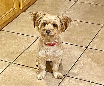 Cookie Photo #1