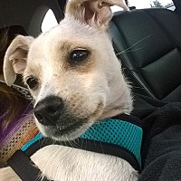 Adopt A Pet :: Treasure - Seattle, WA