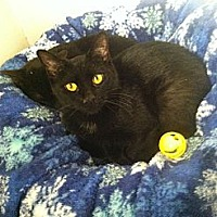 Adopt A Pet :: Salem - New York, NY
