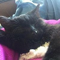Adopt A Pet :: Maui *Courtesy Post* - Redding, CA