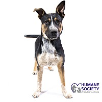 Humane Society of Southern Arizona in Tucson, Arizona