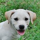 Adopt A Pet :: Garmony B