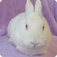 Adopt A Pet :: Maria - Los Angeles, CA