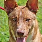 Adopt A Pet :: Billy Bob B