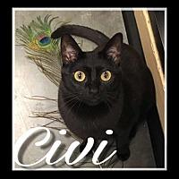 Adopt A Pet :: Civi - Boynton Beach, FL