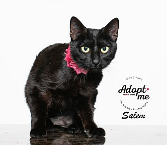 Adopt A Pet :: Salem  - Houston, TX