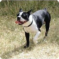 Adopt A Pet :: Gizmo - Riverside, CA