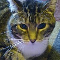 Adopt A Pet :: Galen - South Saint Paul, MN