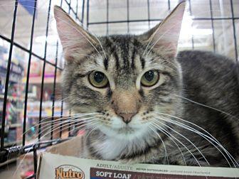 Adopt A Pet :: Sasha  - Dallas, TX
