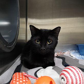 Adopt A Pet :: Jessie  - Moose Jaw, SK
