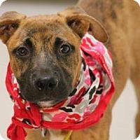 Adopt A Pet :: Luke - Lebanon, CT