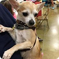 Adopt A Pet :: Meko - Sacramento, CA