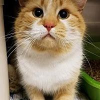 Adopt A Pet :: Jasper - Anderson, IN