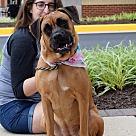 Adopt A Pet :: Hayley